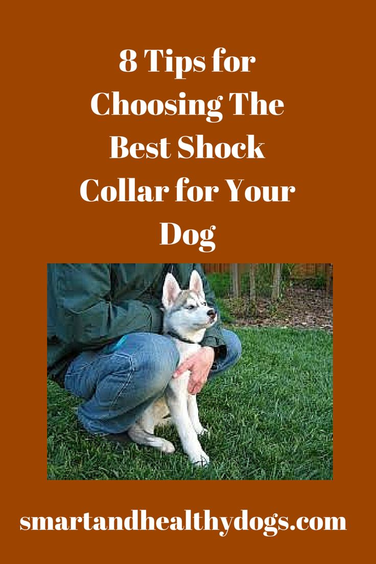 8 Tips for Choosing The Best Shock Collar for Your Dog : http://smartandhealthydogs.com/top-good-shock-collar-dogs/