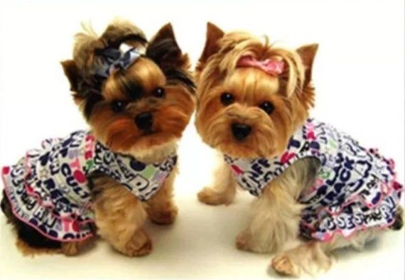 Us Seller Yorkie 39 S In Dresses Dog Lovers Diy 5d Diamond Painting Art Kit Round Drills Partial Drill Combined S H To Yorkie Dogs Yorkie Cute Dog Clothes