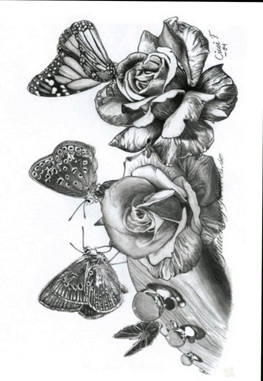 detailed butterfly coloring pages - rose butterfly coloring pages colouring adult detailed