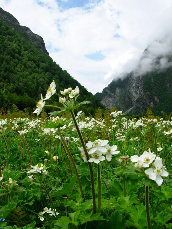 valley of flowers..uttaranchal...India