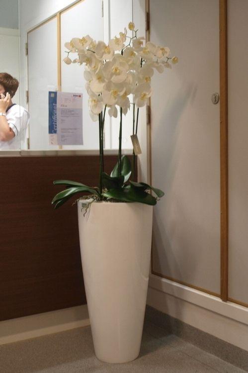 idee voor hoekje in hal (zijden orchidee; kleuren van bloem en pot te bepalen afhankelijk van woonkamer)