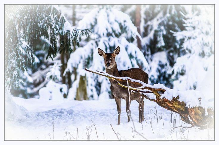Schön wäre es gewesen wenn Weihnachten Schnee gelegen hätte !! von Toms-Photoart