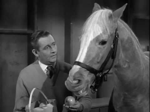 Mister Ed S3 | The Price of Apples