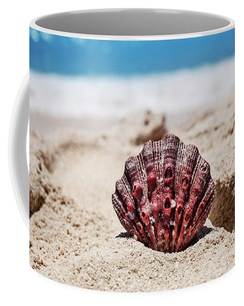 Coffee Mug featuring the photograph Sea Shell by Evgeniya Lystsova. Coffee time, Kitchen, Gift, Home and Office products. Our ceramic coffee mugs are available in two sizes: 11 oz. and 15 oz. Each mug is dishwasher and microwave safe. SHIPS WITHIN 1 -2 business days