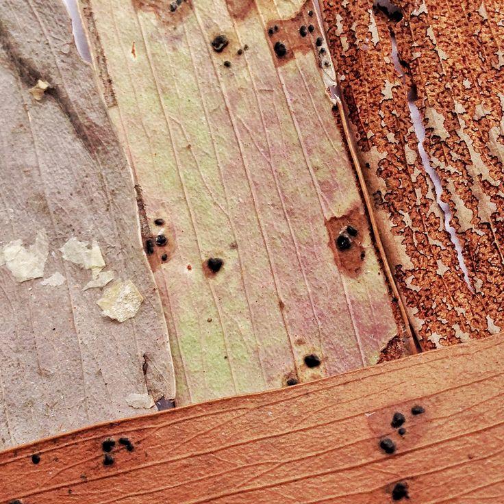 All the different textures of Eucalyptus Leaves. myaustraliangardenartresidency