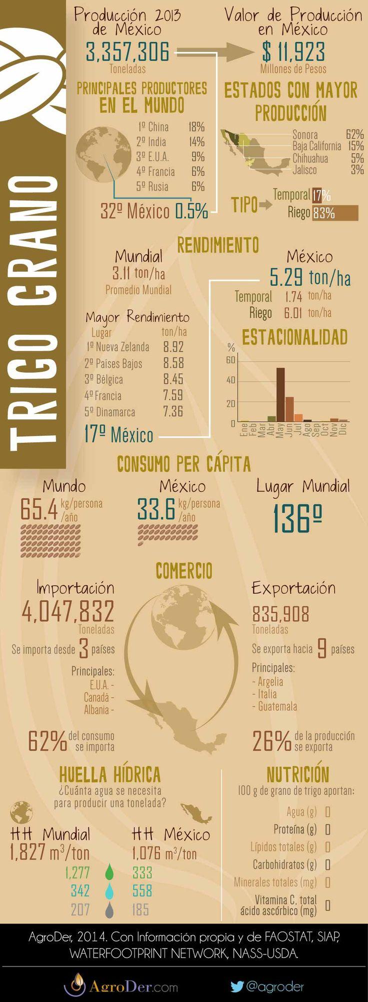 Infografía - Trigo en México, 2013.