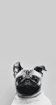 #cachorro #dog #animals