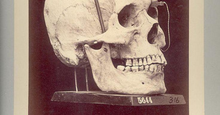 Partes del cráneo humano. El cráneo humano forma la identidad del individuo. Incluye el marco de los ojos, la nariz, las orejas y la boca del individuo. Contiene y protege al cerebro de los traumas leves, de los elementos, y tiene aberturas para cuatro de los cinco sentidos.