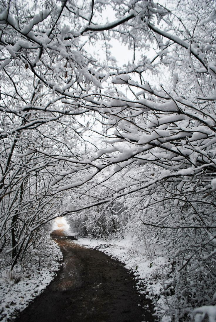 Zubán Diána Hazafelé vezető út. Bodajkon a kastély erdő mellett megy ez az az út. Több kép Diától: http://tilltall.tumblr.com/