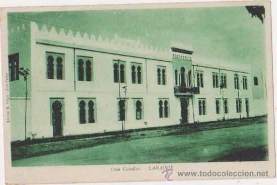 Larache cria caballar,Edicion M.Veiga foto Ferrer (Postales - Postales Extranjero - África - Marruecos)