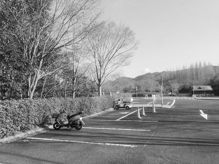 冬森林植物園 Kobe Municipal Arboretum神戸市立森林植物園black and whitetreesskybike