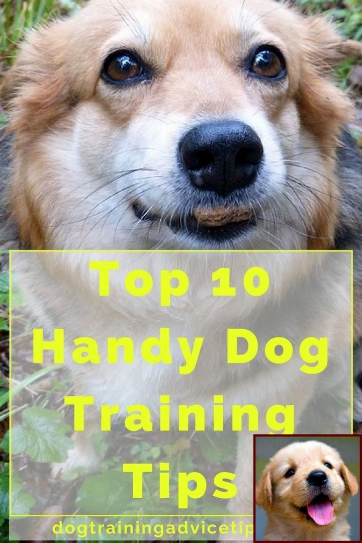 House Training A Puppy In Winter And Clicker Training For Dogs