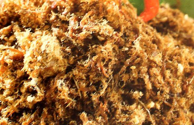 Siapa yang tak suka abon daging? Salah satu penganan khas Indonesia yang dapat juga dijadikan lauk bersantap, paling nikmat disajikan dengan nasi panas mengepul dan bawang goreng. Hmmm, sedaaap! Resep Abon Daging ini juga sangat mudah dibuat. Yuk kita coba!