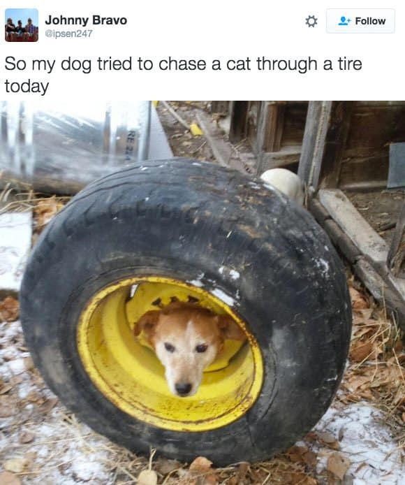 16 Sweet Doggos Who Failed Spectacularly   Lol   Dogs, Animals, pets