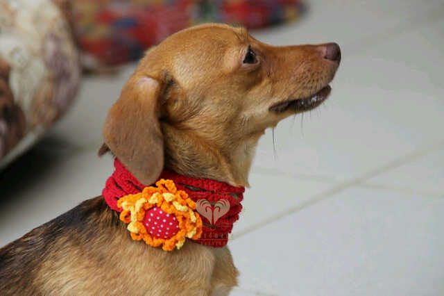 Cute dog with cute necklace. Material : ICT Plain [facebook] Handmade Passion