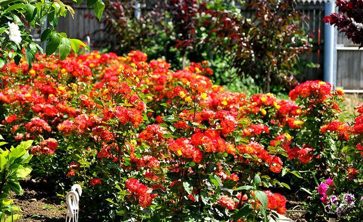 Câteva secrete pentru a reduce semnificativ cantitatea de pesticide din grădina dumneavoastră: