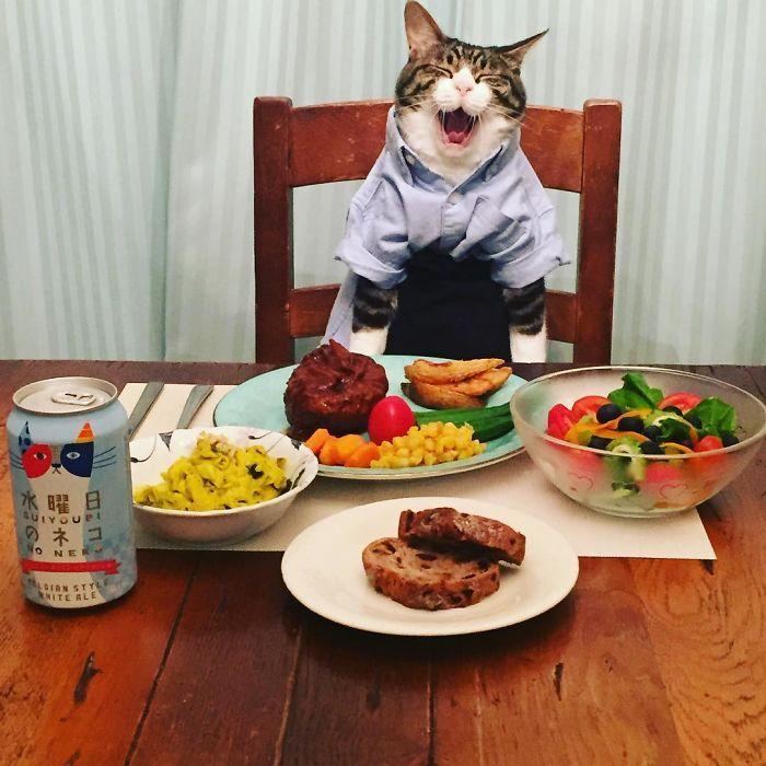 Обед картинка смешная, кошкой день