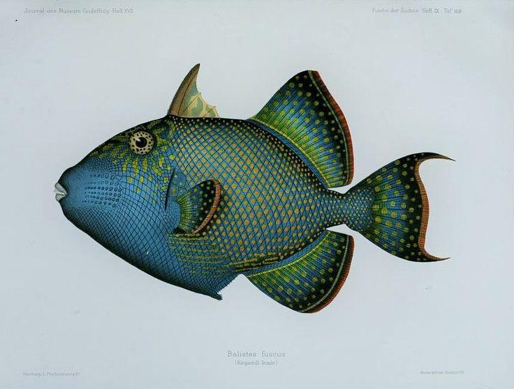 Bd. 6 (1873-1875) - Journal des Museum Godeffroy. - Biodiversity Heritage Library  --