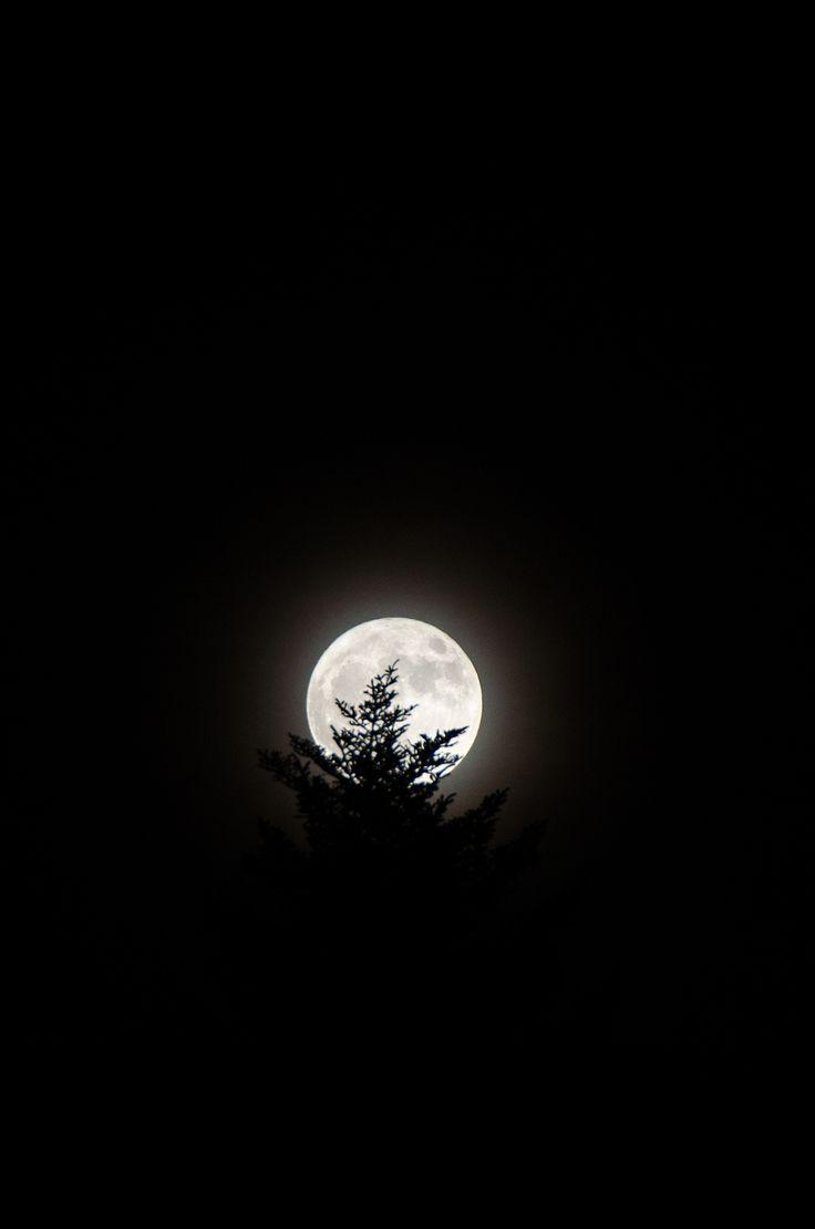 https://flic.kr/p/NKxBpu | Moon & Tree