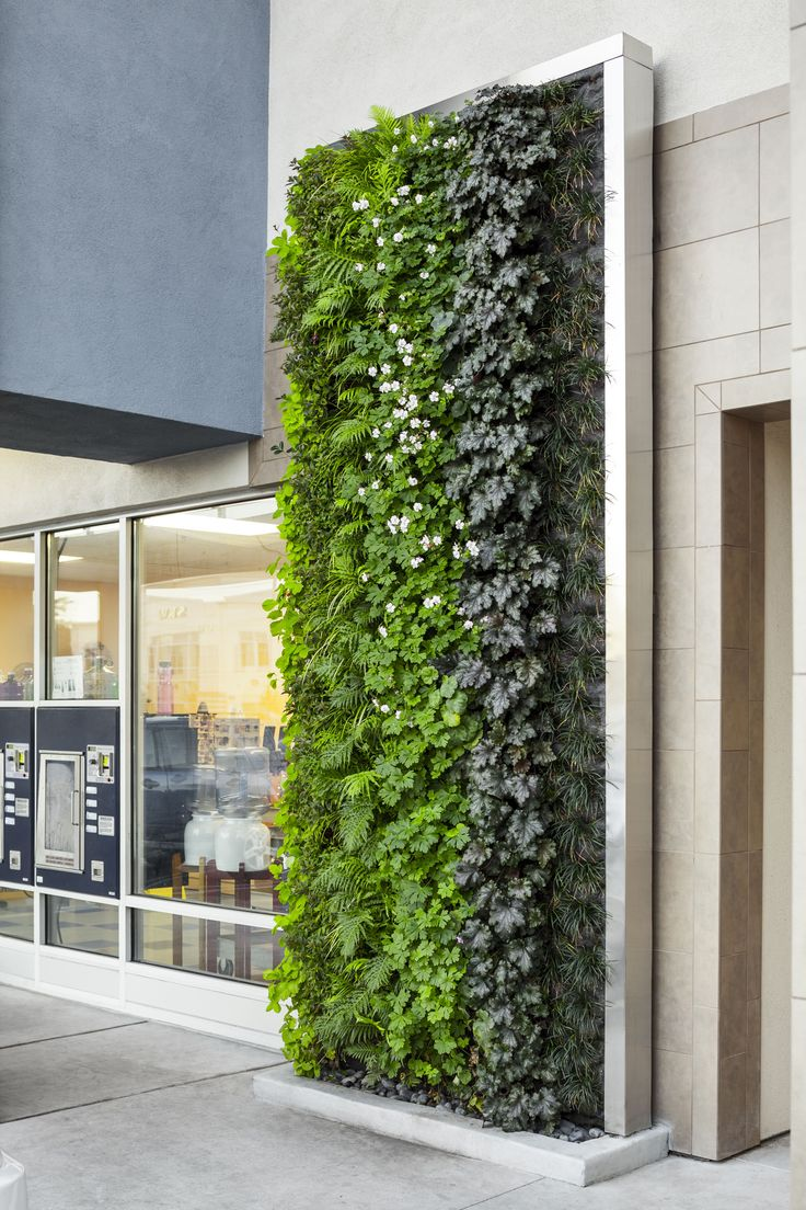 69 best images about vertical gardens on pinterest for Vertical green wall
