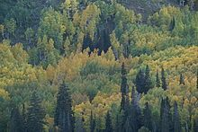 In the United States, most forests have historically been affected by humans to some degree, though in recent years improved forestry practices has helped regulate or moderate large scale or severe impacts