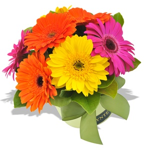Best thing to cheer someone up https://www.tynte.com/products/todays-flowers