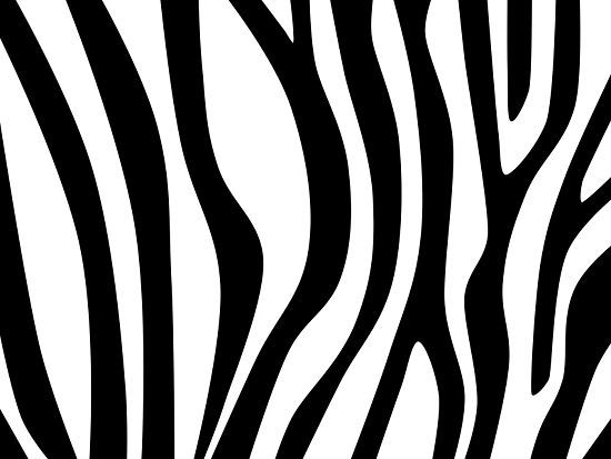 How to Draw Zebra Stripes: 14 Steps (with Pictures) - wikiHow