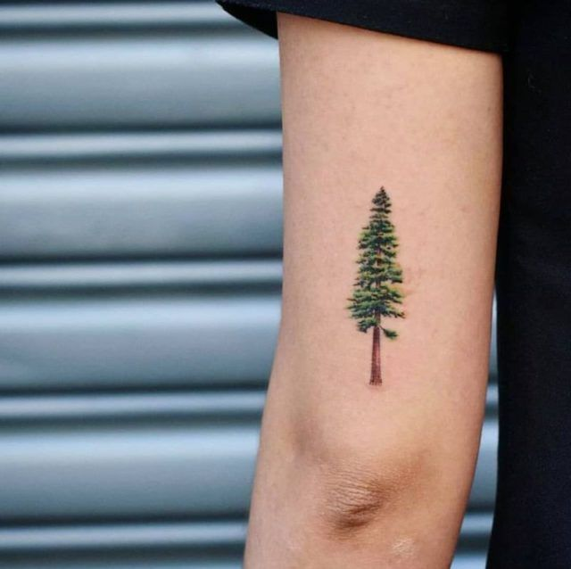50 Gorgeous and Meaningful Tree Tattoos Inspired by Nature's Path – Logos