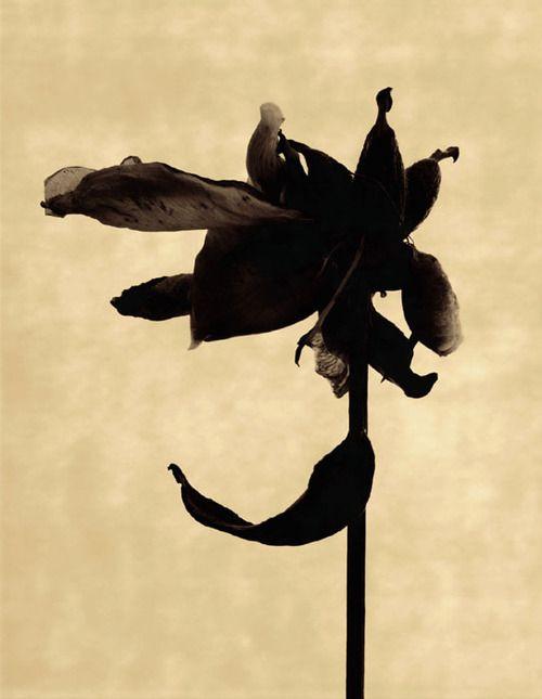 A black flower for her heart///iamjapanese:    Torkil Gudnason(Danish/American)  Untitled #71 2002  Pigment Print