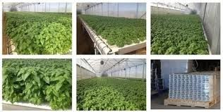 NFT hydroponics channel equipment is designed as a one – piece system that gives mush greater torsion strength. No lids to come off, no risk of crop loss. You can be sure that this NFT channel will continue to serve you well for many years.