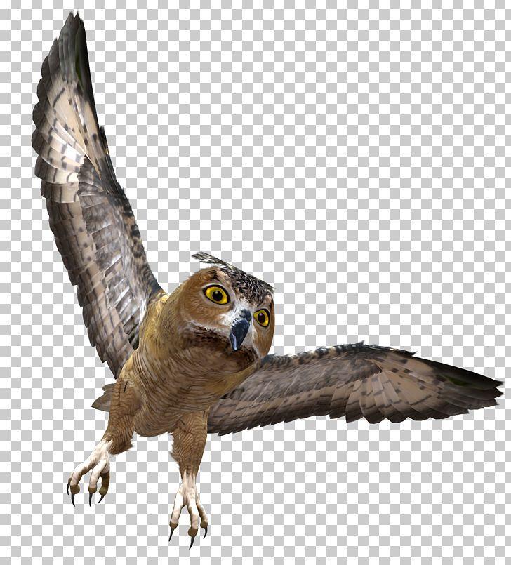 Owl Png Alpha Compositing Animal Barn Owl Beak Bird Owl Png Owl Owl Pictures