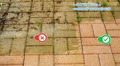 La mousse a recouvert votre terrasse ?Pas besoin d'utiliser des produits corrosifs et toxiques comme la Javel pour l'éliminer.Un ami jardinier m'a confié 2 trucs naturels pour s'en d&eac