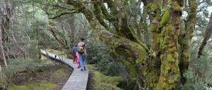 Tasmania with Kids – Part 1: Hiking the Cradle Valley, Sailing on the Spirit, and Dancing with the Devils
