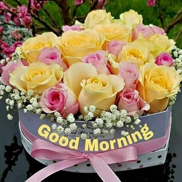 Image May Contain Flower Plant And Nature Good Morning Flowers Good Morning Greetings Morning Flowers