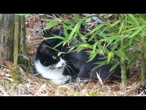 6 Minutes and 50 seconds: Two Cats - Extremely boring!
