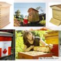Different Types Of Honey Bee Hives Picture – Natural And Apiary Hives.