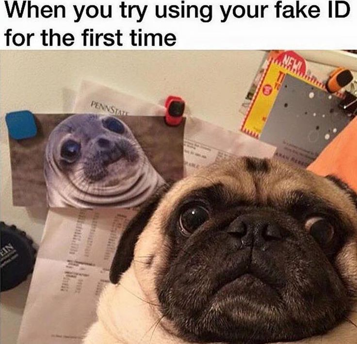 Funny Pug Dog Meme LOL                                                                                                                                                                                 More