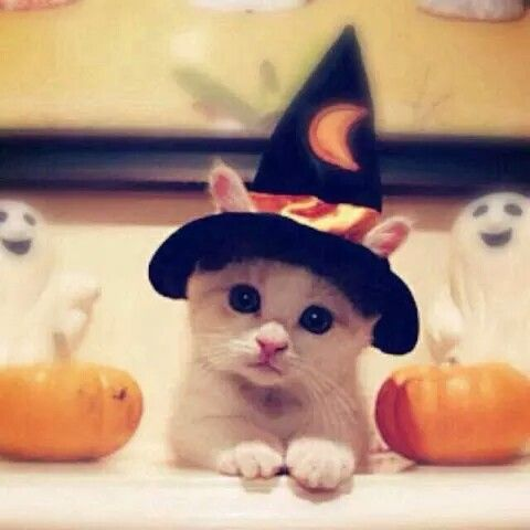 A kitten in a witch hat for Halloween