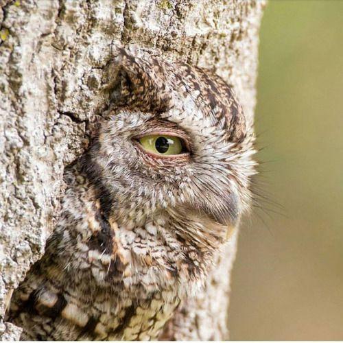 """beautiful-wildlife: """"Camouflage by © William Kleinfelder """""""