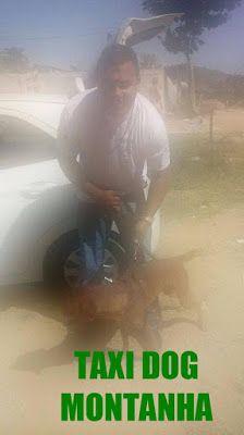 TAXI DOG MONTANHA TRANSPORTE DE ANIMAIS NO RIO DE JANEIRO: ZONA NORTE-RJ pra AUSTIM