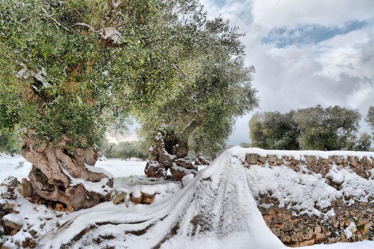 SNOW IN...OSTUNI! by Lucilla Cuman on 500px https://www.facebook.com/LucillaCumanPhotography