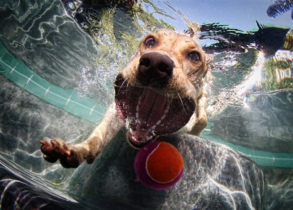 B-E-L-L-Y-F-L-O-P! Amazing photos of underwater dogs - Animal Tracks