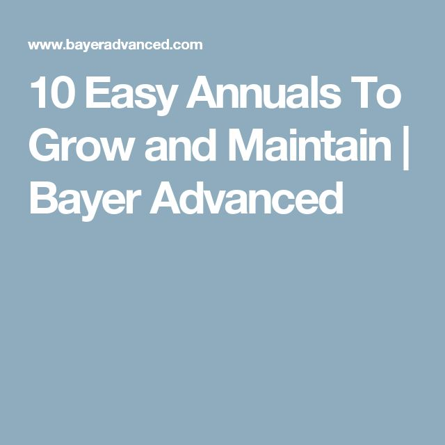 10 Easy Annuals To Grow and Maintain | Bayer Advanced
