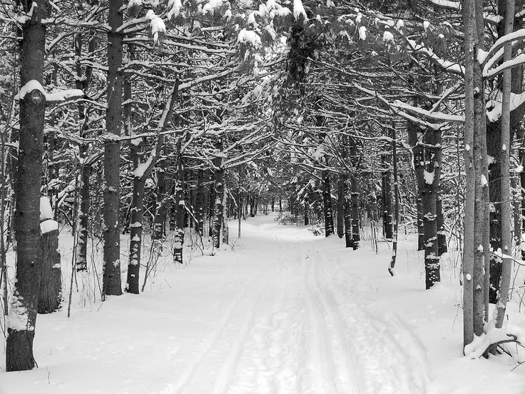 critical analysis robert frost s stopping woods snowy even One is from robert frost's stopping by woods on a snowy evening, the other from  poirier in robert frost:  that frost's critical theory and.