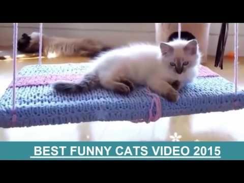video lucu binatang: funny cat videos