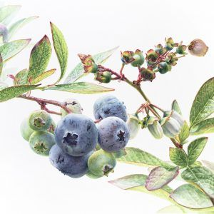 The Jackson's Judging Panel have decided on a shortlist! Thank you so much to everyone who entered - the quality of work was astounding. We can't wait to see who Sandra Wall Armitage, The President of The Society of Botanical Artists, will pick as the overall winner; scroll down to see our shortlist gallery.