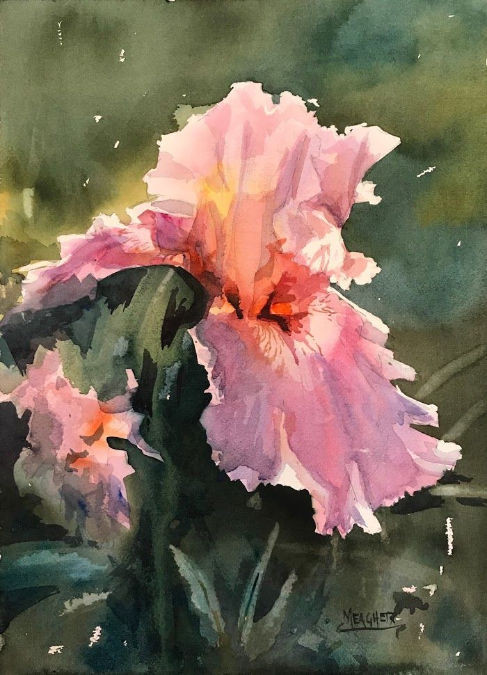 Glowing Watercolor Of A Pink Iris Follow The Link To See A Brief