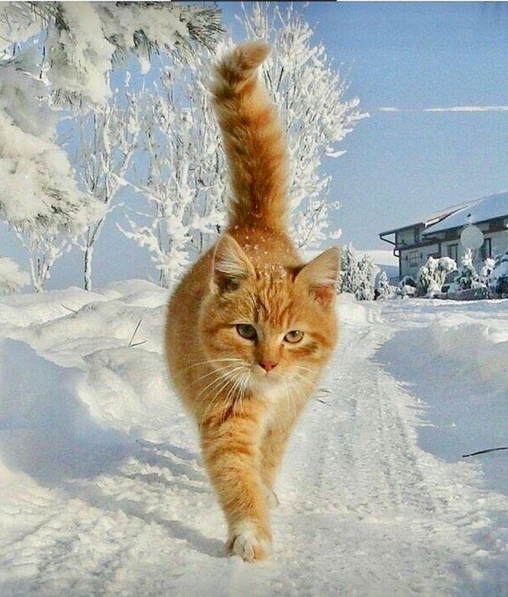 вкладке картинки кот радуется зиме шкафом-купе холл