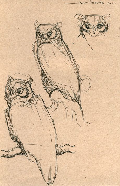 the silence of anime perseverance an owl