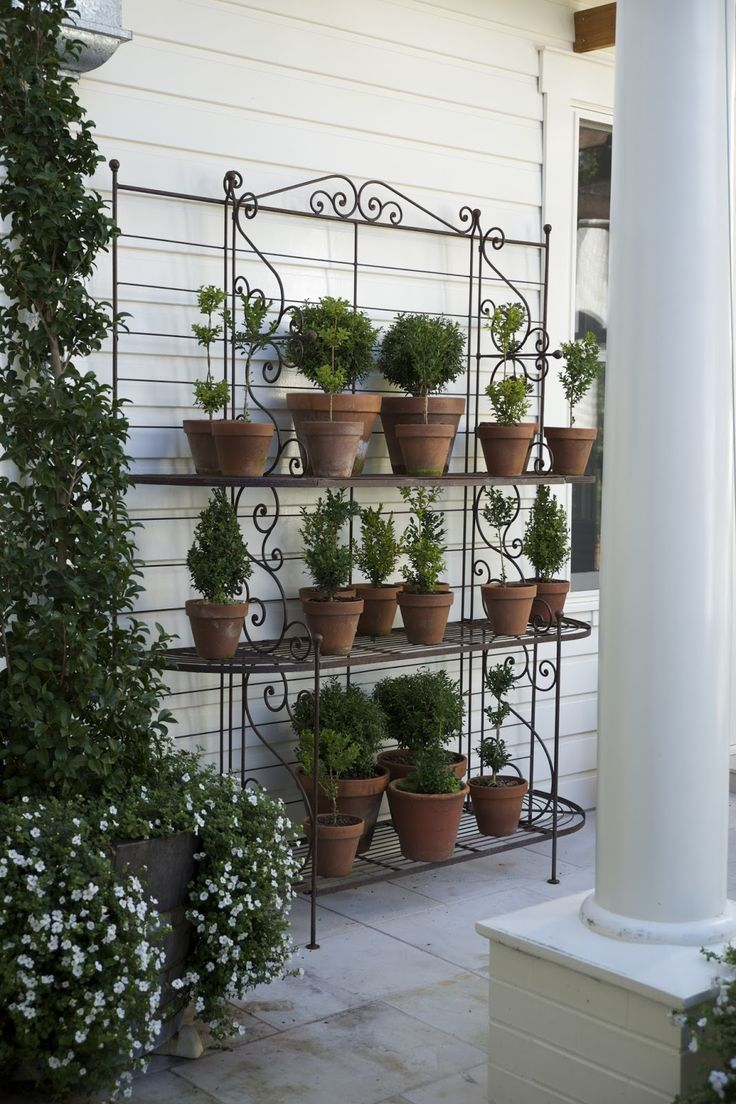 THE ART OF TOPIARY         According to historians, the practice of topiary has been around for centuries, over 2000 years to be exact. ...